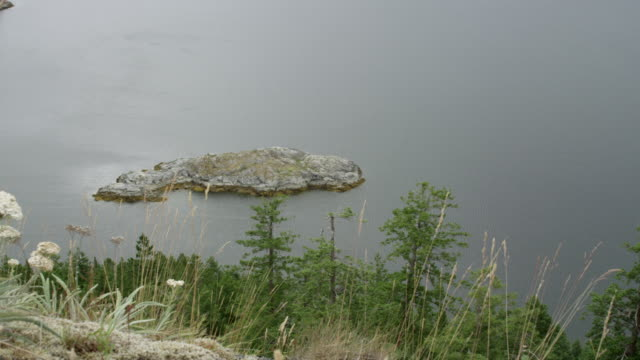 WS PAN Shot of Island in Strait of Georgia with wild flowers / Cortes, British Columbia, Canada