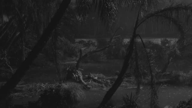 ms shot of jungle and swamp - focus on background stock videos and b-roll footage