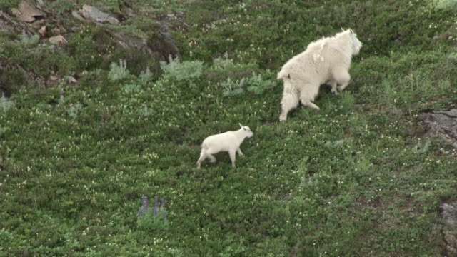 ms aerial ts shot of kid following mom running up slope together on juneau mountains / alaska, united states - juneau stock videos and b-roll footage