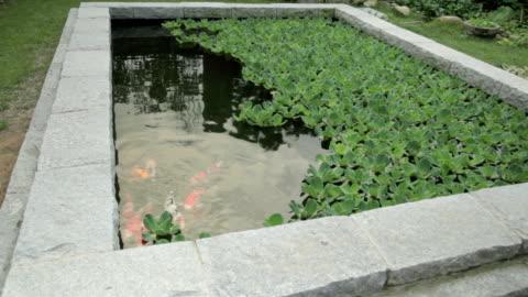vidéos et rushes de shot of koi carps in the pond at jeonju hanongmaeul village - étang
