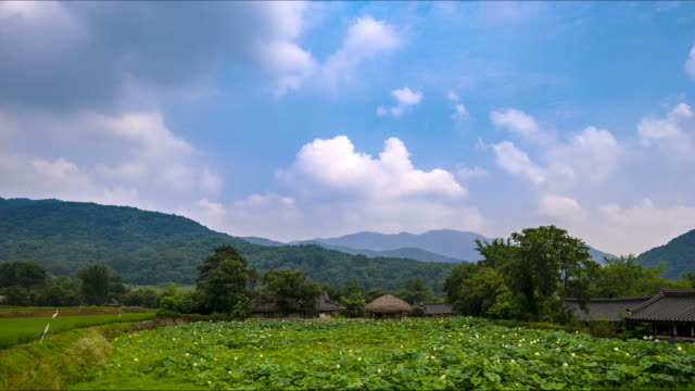 Shot of Korean Chogajip House (Traditional Thatched Roof House) and Giwajip House behind rice paddy at Oeam Maul rural area