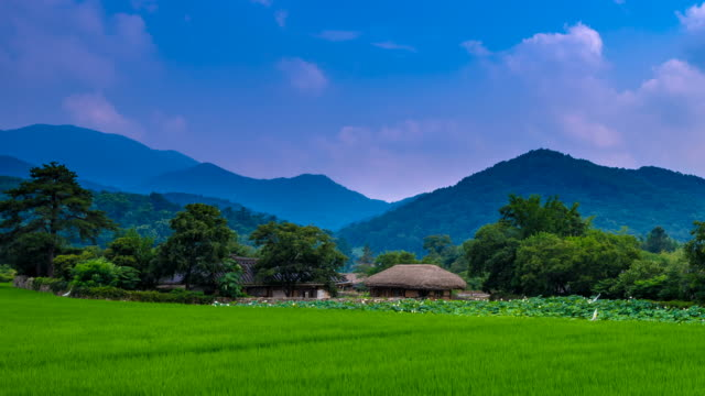 Shot of Korean Chogajip House (Traditional Thatched Roof House) and rice paddy at Oeam Maul rural area
