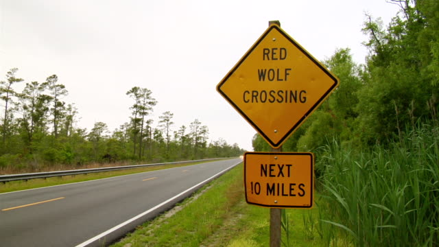 ws shot of large truck passing through with sign reading red wolf crossing / aligator river refuge, north carolina, united states - wiese stock videos & royalty-free footage