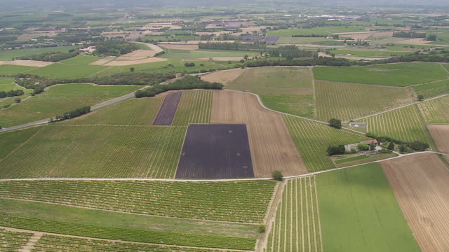 WS AERIAL ZI Shot of Lavender fields and vineyards / Rhone Alpes, France