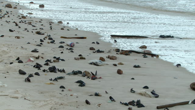 ms shot of littered beach / western cape, south africa - littering stock videos & royalty-free footage