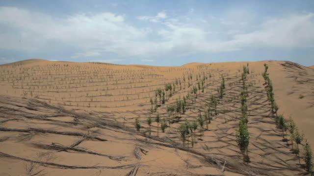 Shot of little trees planted at desert in Australia