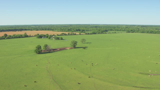 WS AERIAL Shot of livestock with houses at farm fields with ponds and trees in Bourbon County / Kansas, United States
