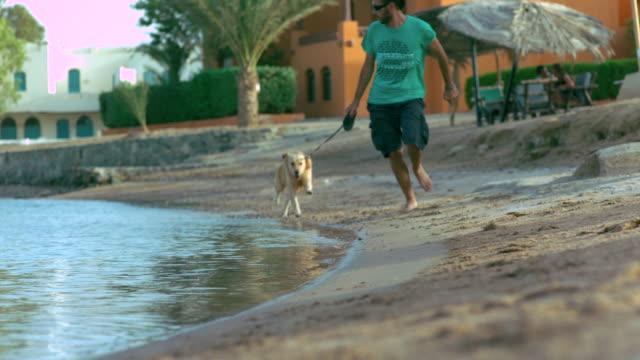 stockvideo's en b-roll-footage met ws slo mo shot of man and dog running near beach area / elgouna, red sea, egypt - alleen één mid volwassen man