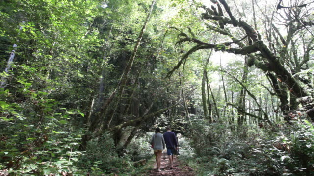 MS Shot of Man and woman walking away along hiking path in lush green forest / Crescent City, California, United States