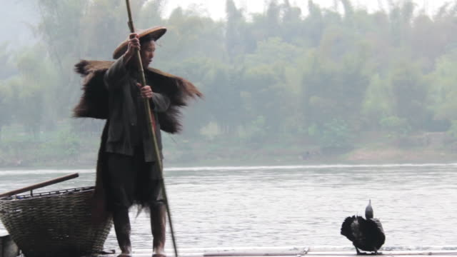ms pan shot of man fishing with birds / close to li river, guangxi, china - one mid adult man only stock videos & royalty-free footage