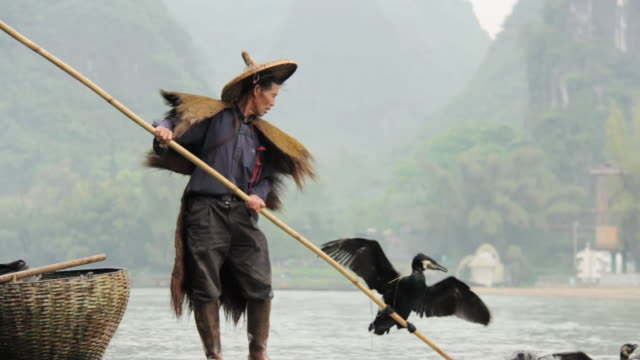 ms td shot of man fishing with birds / close to li river, guangxi, china - one mid adult man only stock videos & royalty-free footage