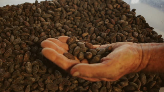vidéos et rushes de cu shot of man hand showing large pile of roasted cocoa beans / kauai, hawaii, united states - chocolat