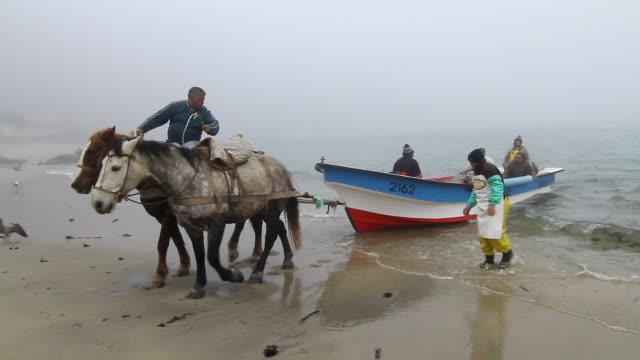vídeos y material grabado en eventos de stock de ms shot of man on horseback pulling in boat from water with people in it / horcon, chile - wiese