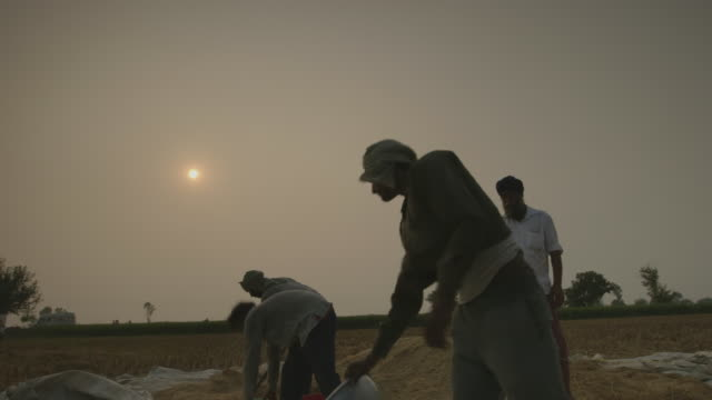 ms la shot of man pouring out grain and chaff / new delhi, india - farm worker stock videos & royalty-free footage