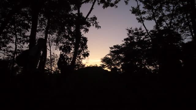 vídeos y material grabado en eventos de stock de ms shot of man walking at sunset time near tree / aguacate, toledo, belize - wiese