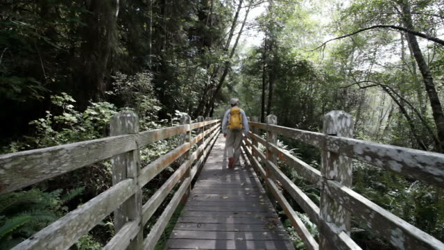 MS Shot of man walking away across wooden bridge in forest / Crescent City, California, United States
