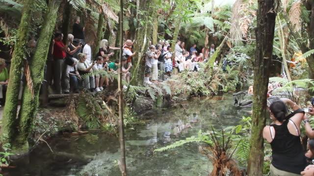 MS PAN Shot of Maori Show in Canoe with tourists / Rotorua, New Zealand