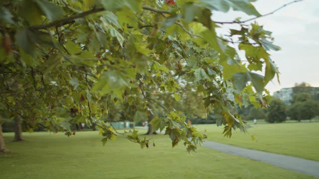 vídeos de stock, filmes e b-roll de tiro de pov da árvore de bordo no parque do regente - parque regents