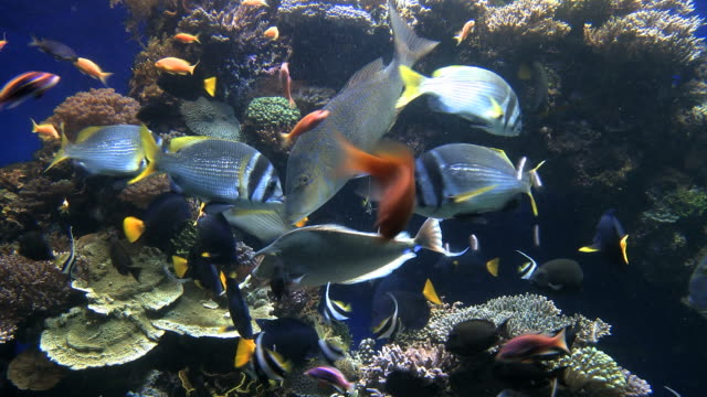 ms shot of marine center water tank with fish / eilat, arava, negev desert, israel  - 水族館点の映像素材/bロール