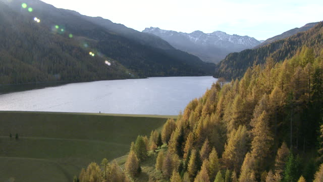 MS AERIAL Shot of Marmorera dam and reservoir, surrounded by yellow forest in autumn / Marmorera, Glarus, Switzerland