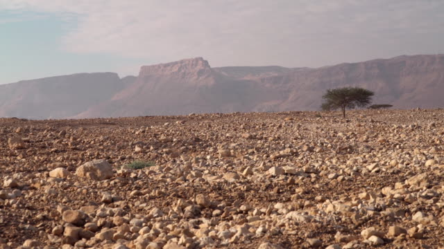 ws shot of masada in negev desert with large rocks on ground / israel - biblical event stock videos & royalty-free footage