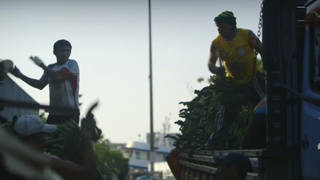 ms td tu shot of men's unloading bunches of bananas from truck at mercado municipal market / manaus, amazonas, peru - 積荷を降ろす点の映像素材/bロール