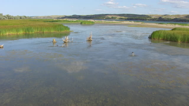 MS AERIAL Shot of Missouri River with birds flying / Pierre, South Dakota, United States