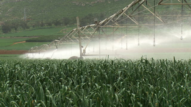 ms shot of modern agriculture with large irrigation sprinklers spraying water over lush crops / harod valley, israel  - attrezzatura per l'irrigazione video stock e b–roll