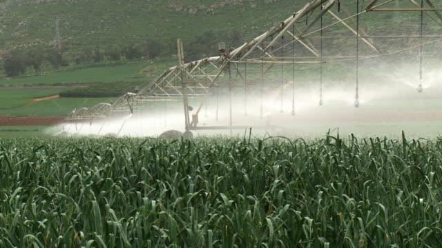 stockvideo's en b-roll-footage met ms shot of modern agriculture with large irrigation sprinklers spraying water over lush crops / harod valley, israel  - irrigatiesysteem