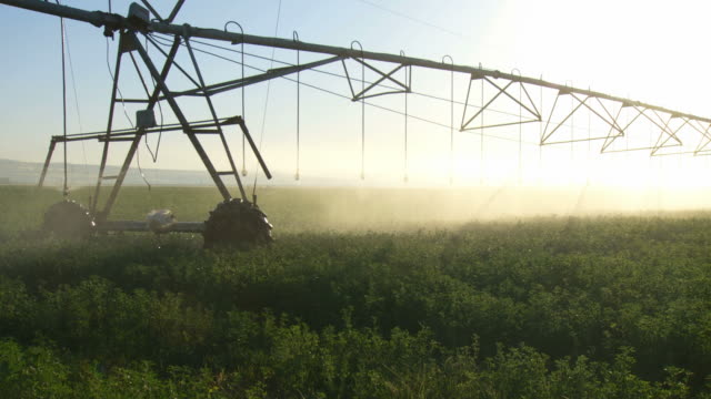 ms shot of modern agriculture with large irrigation sprinklers spraying water over lush crops / galilee, israel  - bewässerungsanlage stock-videos und b-roll-filmmaterial