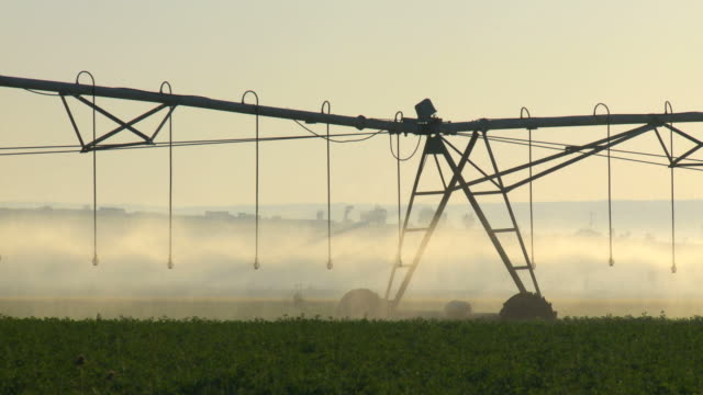 MS Shot of modern agriculture with Large irrigation sprinklers spraying water over lush crops / Galilee, Israel