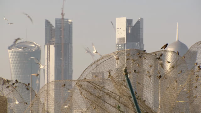 ms shot of modern buildings in doha and birds flying around / doha, qatar  - doha bildbanksvideor och videomaterial från bakom kulisserna