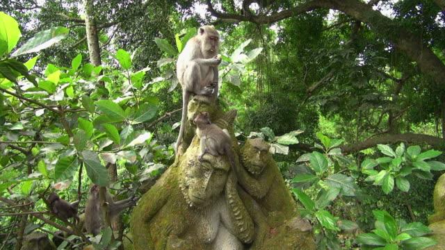 Shot of Monkey Family Eating On Statue