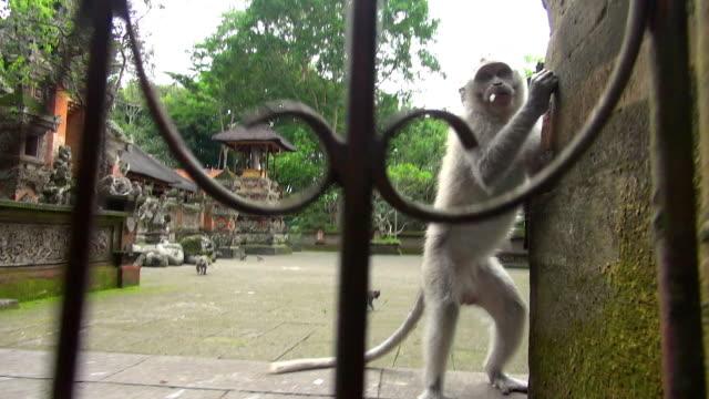 Shot of Monkey Pushing Away Camera