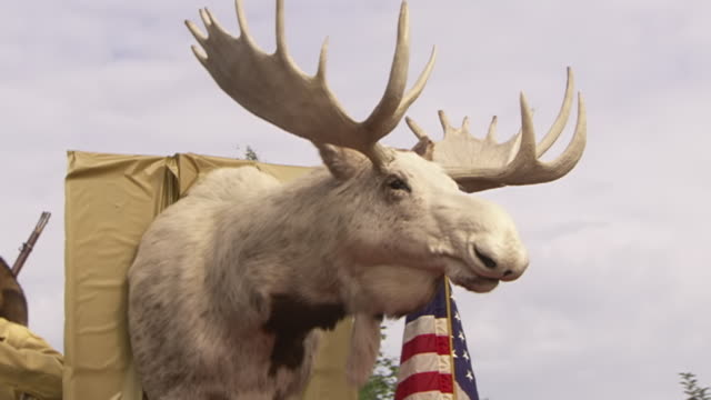 cu zi shot of moose head float carrying hunter and saloon dancers during golden days festival kinross fort knox parade / fairbanks, alaska, united states - ヘラジカ点の映像素材/bロール