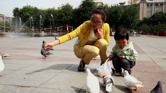 ms shot of mother and daughter feeding dove / xian, china - daughter stock videos & royalty-free footage