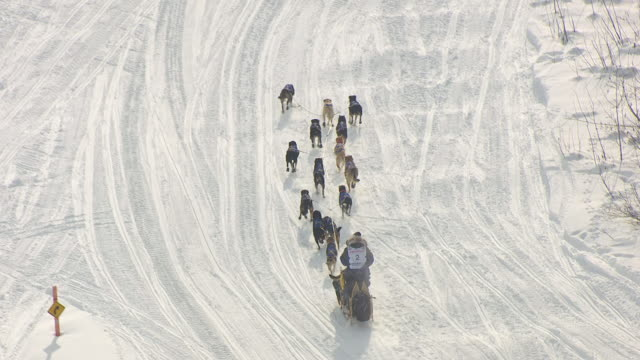 ms aerial zo shot of musher and dogsled team racing during iditarod trail sled dog race / willow, alaska, united states - pure bred dog stock videos and b-roll footage