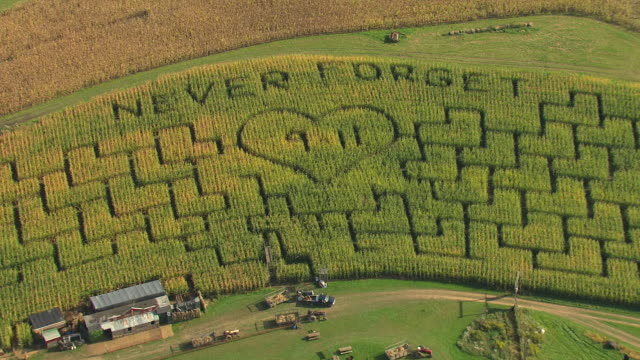 cu aerial zo ds shot of never forget september 11 corn maze / pennsylvania, united states - september 11 2001 attacks stock videos & royalty-free footage
