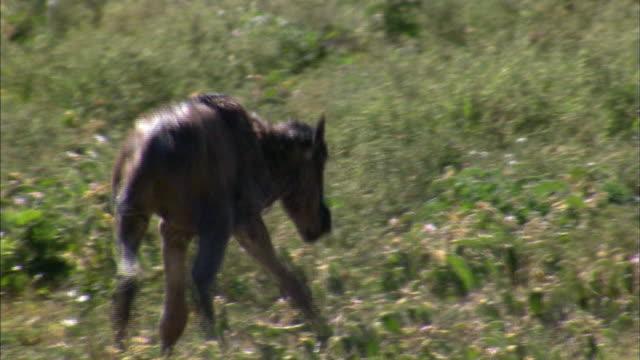Shot of Newborn Wildebeest at Serengeti
