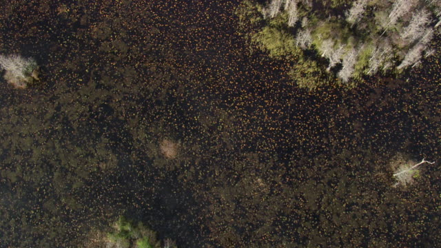 aerial ws shot of okefenokee swamp / georgia, united states - okefenokee national wildlife refuge stock videos and b-roll footage