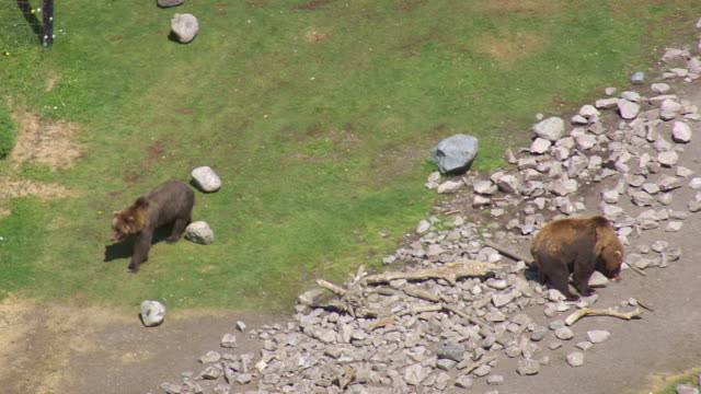 ms aerial ts shot of one bear licking on stone while other roaming / wyoming, united states - other stock videos & royalty-free footage