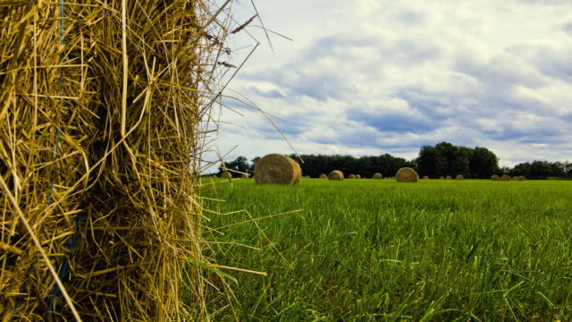 MS T/L TU Shot of open Hay field landscape / Limousin, France