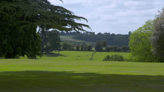 WS Shot of open landscape with sheep at Highclere Castle / Hampshire, United Kingdom