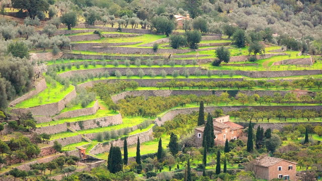 ws shot of orange plantation in town / fornalutx, mallorca, balearic islands, spain - plantation stock videos & royalty-free footage