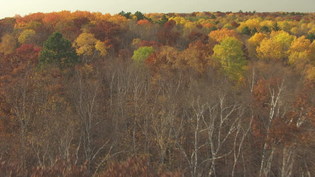 ms aerial shot of orbit over top of fall trees in clearwater county / minnesota, united states - minnesota stock videos & royalty-free footage