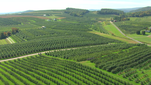 vídeos de stock, filmes e b-roll de ws aerial shot of orchard in adams county / pennsylvania, united states - orchard