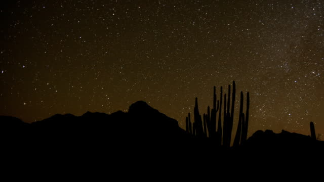 MS T/L Shot of Organ Pipe cactus against mountains / Organ Pipe Cactus National Park, Arizona, United States
