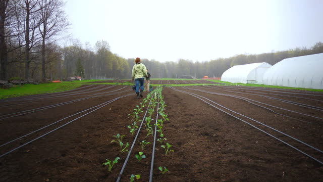 vídeos de stock e filmes b-roll de ms slo mo shot of organic farmers plant rows of vegetables, woman gets up walking away and jumping over plant row / chatham, michigan, united states - jaqueta jeans