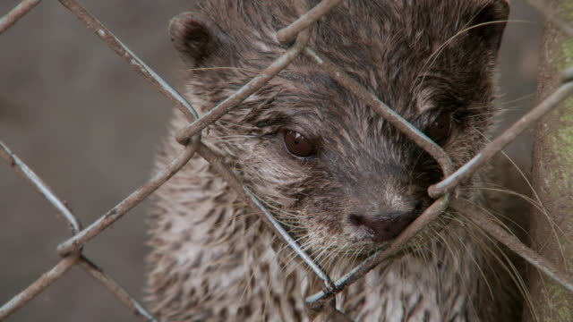 cu shot of otter within an enclosure fence / various, united kingdom - trapped stock videos & royalty-free footage