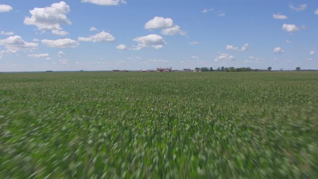 cu aerial la tu shot of over crops and pull up to bagg bonanza farm / mooreton, north dakota, united states - espansione verso l'ovest video stock e b–roll